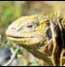 exotic reptile stock images